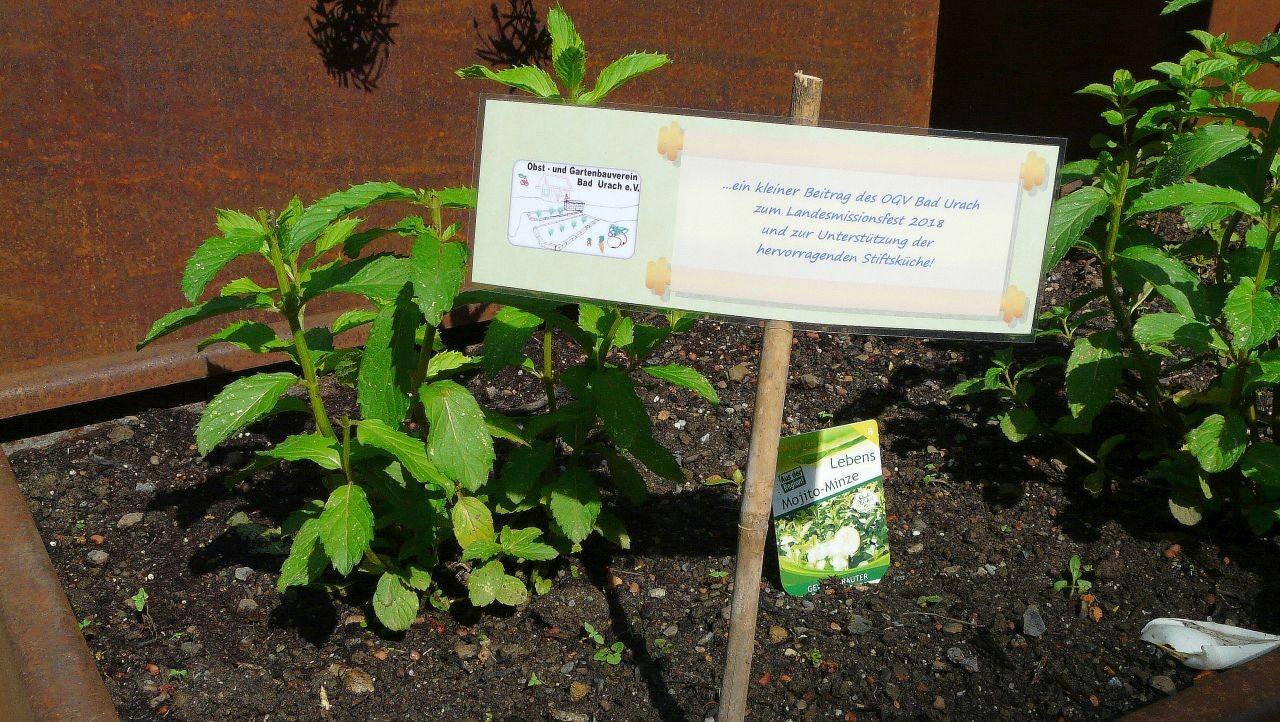 Obst- und Gartenbauverein gestaltet Kräutergärtle in Stift Urach